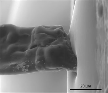 Cellulose fibre making contact with a water droplet in the ESEM