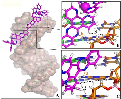 Nucleic acids dynamics interactions and recognition