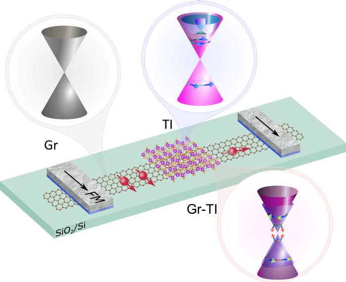Device consisting of a Graphene – Topological Insulator heterostructure channel and ferromagnetic tunnel contacts.