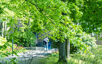 Greenery at Campus Johanneberg