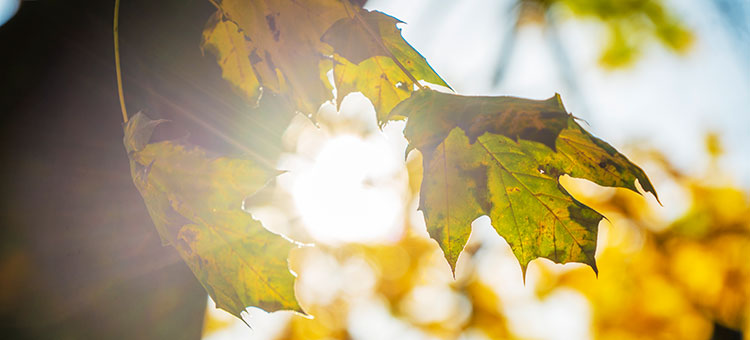 Audio description: Sunshine through leaves at Campus Johanneberg